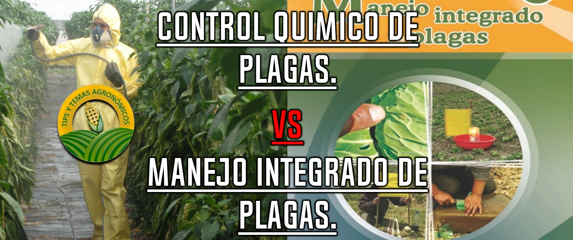 Manejo integrado de plagas vs control qu mico for Control de plagas tenerife